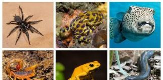 Venom of Some Animals That can Earn you Million of Dollars